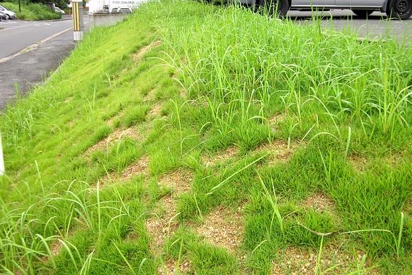 のり面芝刈り